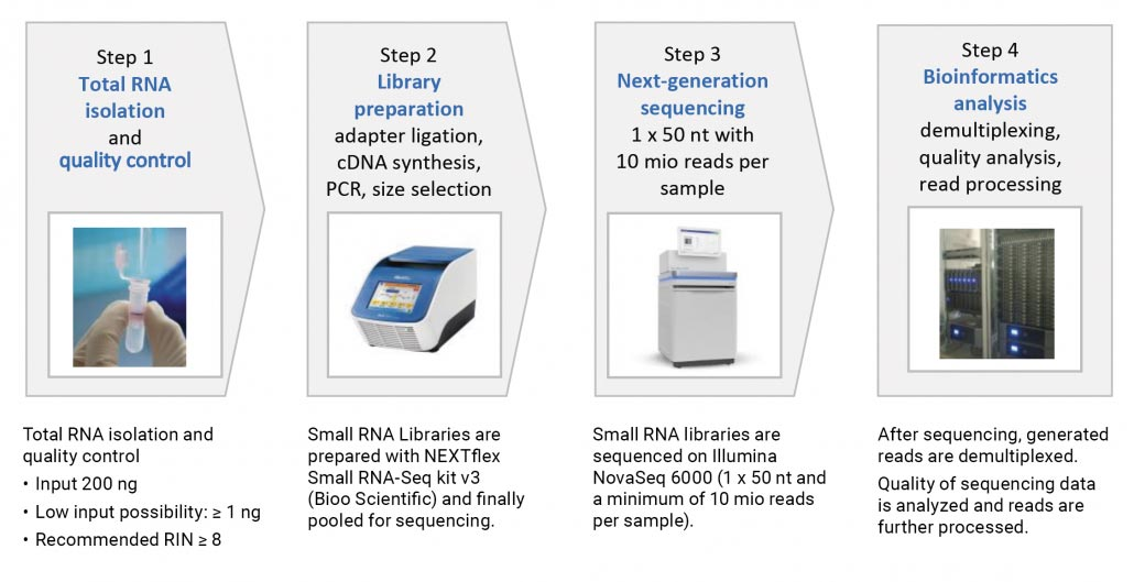 Experimental workflow for small RNA sequencing: From sample preparation to final data analysis.